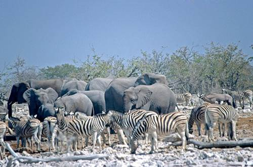 best african safari locations